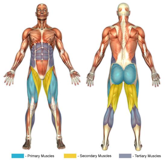 Hack Squats (Machine) | Chunk Fitness