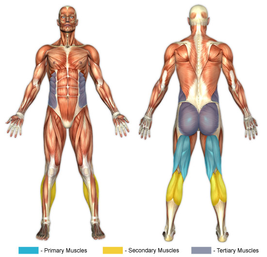 Leg Curls (Exercise Ball) | Chunk Fitness