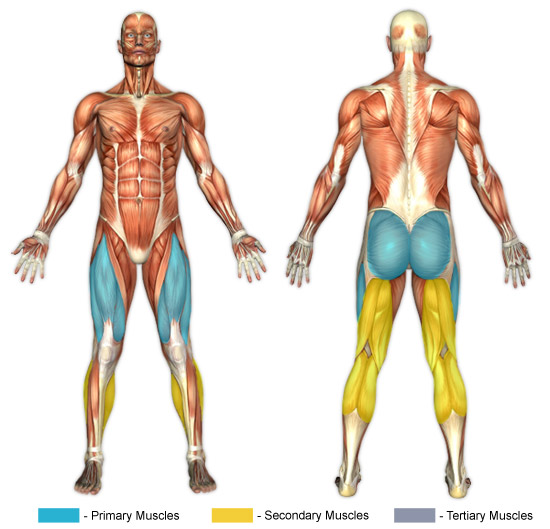 Lunges  Barbell  Muscle ImageWalking Lunges Muscles Worked