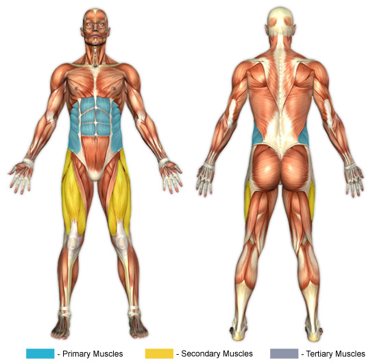 Image Result For Twisting Muscles