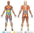 Bicycle Kicks (Flat Surface) Muscle Image