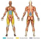 Knee Raises (Dip Machine) Muscle Image