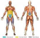 Leg Raises (Flat Surface) Muscle Image