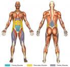 Leg Raises (Hanging Straps) Muscle Image