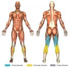 Lying Leg Curls (Machine) Muscle Image