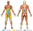 Reverse Crunches Muscle Image