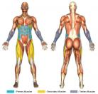 Side Knee Raises (Hanging Straps) Muscle Image