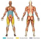 Sit Ups (Elbow to Knee Twist) Muscle Image