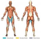 Standing Hip Adductions (Cable) Muscle Image