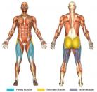 Standing Knee-Ups (Machine) Muscle Image