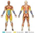 Suspended Leg Raises (Dip Machine) Muscle Image