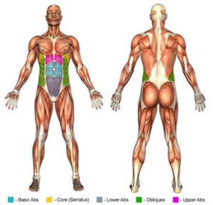 Upper Ab Exercises Muscle Image