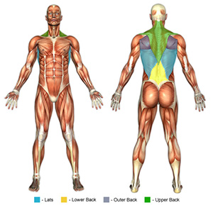 Lat Exercises Muscle Image