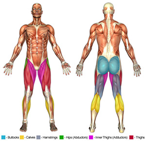 Leg Muscle Groups